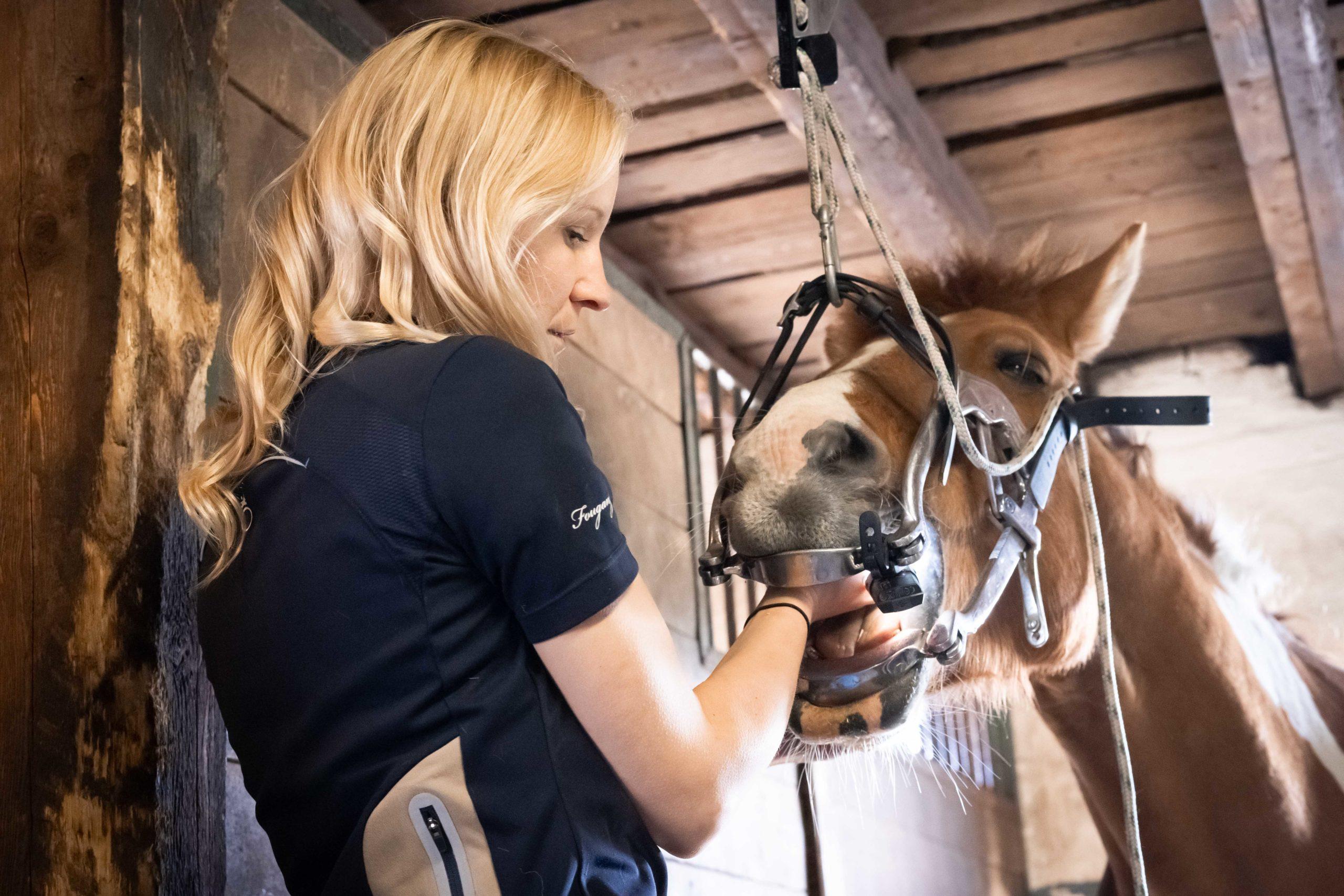 Hevosen hammashoito WHG Equine Sport Performance, equinevet.fi